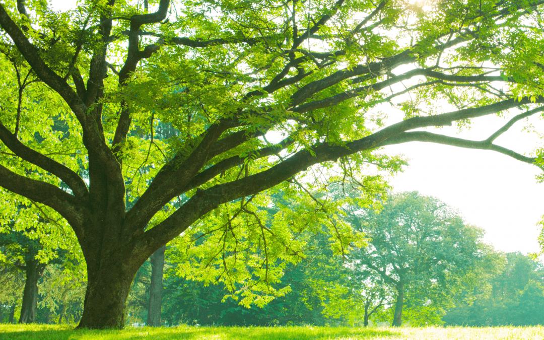 Regalare un albero: come farlo e 10 siti web da conoscere