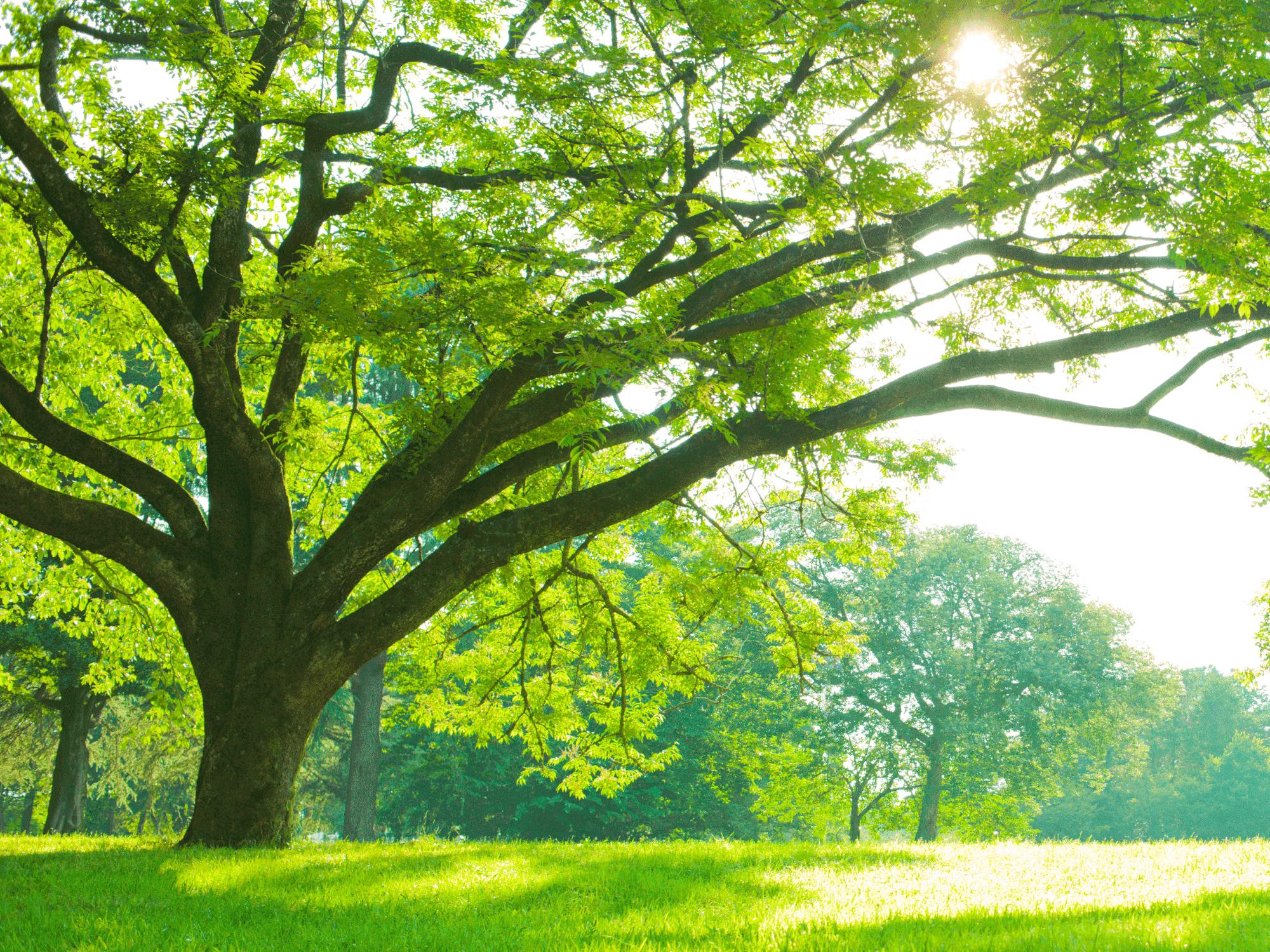 Come fare per regalare un albero